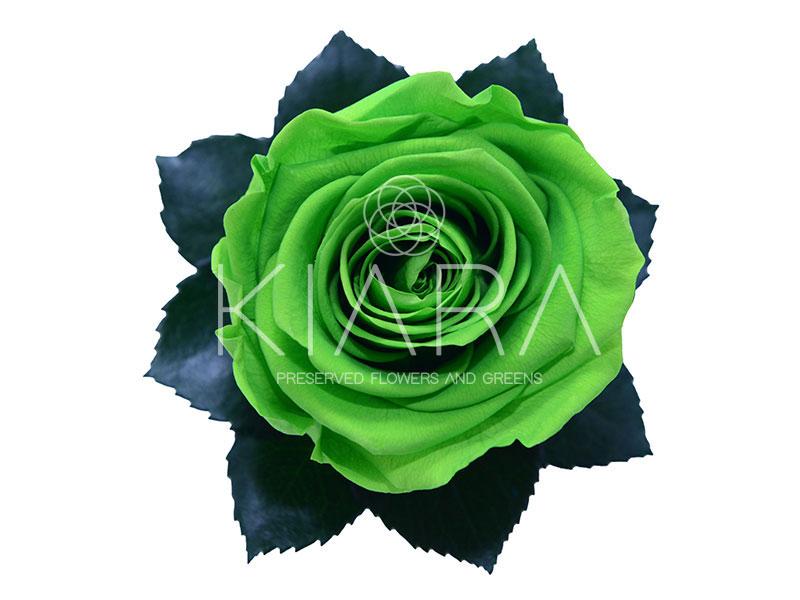 GREEN GLOW G03